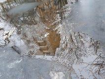 多层的大厦的反射在一个水坑的在路面,树的光秃的分支,雪熔化 库存图片