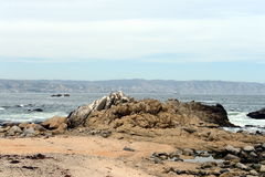 多岩石的海滩在比尼亚德尔马 库存照片