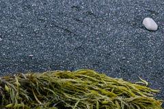 黑多岩石的海滩,新南威尔斯澳大利亚 免版税库存照片