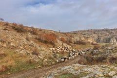 多布罗加峡谷,罗马尼亚 库存照片