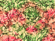 从多彩多姿的下落的叶子的秋天背景 图库摄影