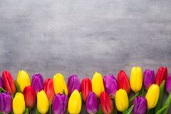 多彩多姿的春天开花,在灰色背景的郁金香 免版税图库摄影