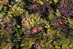 多彩多姿的普罗梯亚木、淡紫色和thuya花束  花卉patte 免版税库存照片