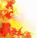 多彩多姿的槭树叶子 库存照片