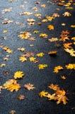 多彩多姿的槭树在沥青离开在雨以后在秋天 库存图片