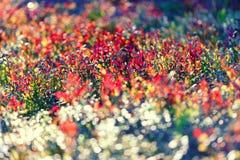 多彩多姿的灌木在森林里 免版税库存图片