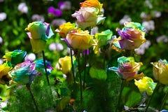 多彩多姿的玫瑰彩虹花束上升了 图库摄影