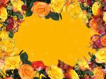 多彩多姿的玫瑰框架  免版税库存图片