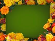 多彩多姿的玫瑰框架  库存图片
