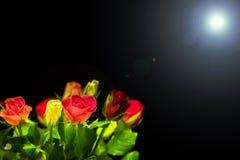多彩多姿的玫瑰 库存照片