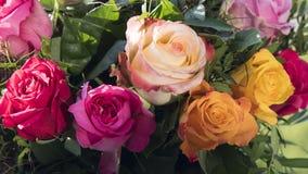 多彩多姿的玫瑰 免版税库存照片