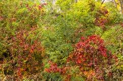 多彩多姿的秋叶 免版税库存照片