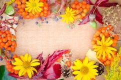 多彩多姿的秋天植物和花 库存照片