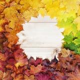 多彩多姿的秋天槭树叶子梯度  查出的秋天美好的框架离开实际白色 库存照片