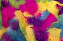 从多彩多姿的羽毛的背景 库存图片
