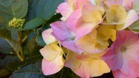 多彩多姿的花花束  免版税库存照片