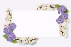 多彩多姿的花,绿色叶子,在白色背景的分支框架  平的位置,顶视图 蝴蝶下落花卉花重点模式黄色 模式 图库摄影
