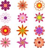 多彩多姿的花,花例证, Whiet 免版税库存图片