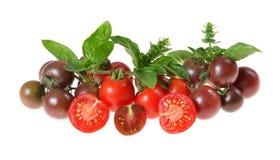 多彩多姿的西红柿,蓬蒿,从有机庭院采摘了 免版税库存图片