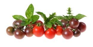 多彩多姿的西红柿,蓬蒿,从有机庭院采摘了 库存图片