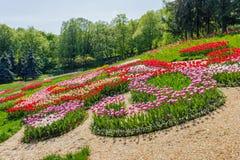 多彩多姿的郁金香在公园 库存照片