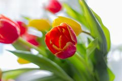 多彩多姿的郁金香花束在灰色背景的 免版税库存图片