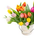 多彩多姿的郁金香花花束在白色的 免版税库存照片