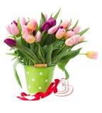 多彩多姿的郁金香花花束在白色的 库存图片