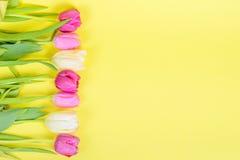 多彩多姿的郁金香行边界或框架的 免版税库存图片