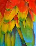 多彩多姿的金刚鹦鹉羽毛 库存照片