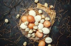 多彩多姿的鸡和鹌鹑蛋与秸杆和分支, spr 免版税库存图片