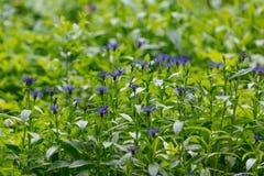 多彩多姿的紫罗兰色背景 库存照片