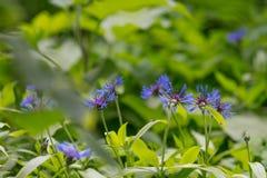 多彩多姿的紫罗兰色背景 免版税库存照片
