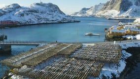 多彩多姿的rorbu和停泊钓鱼船在罗弗敦群岛群岛海湾  影视素材