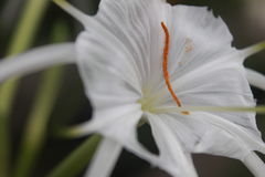 多数秀丽白花 图库摄影