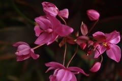 多数秀丽紫色花 库存照片