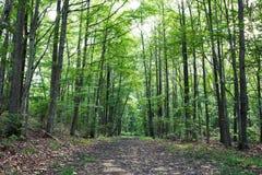 多数美丽的供徒步旅行的小道在新泽西 免版税库存照片