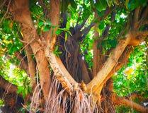 多数美丽的树 图库摄影