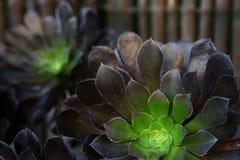 多样化的多汁植物 免版税图库摄影