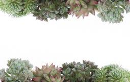 多汁开花的室内植物边界框架 免版税库存照片