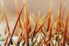多汁植物刺 免版税库存照片