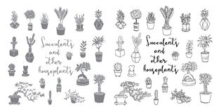 多汁植物和其他室内植物 库存照片