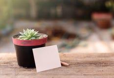 多汁植物和纸 免版税库存图片