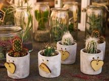 多汁植物和仙人掌在另外具体罐和瓶子有wo的 免版税库存图片