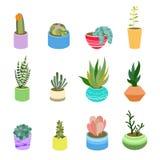 多汁植物和仙人掌在罐不同的颜色 家庭设计的逗人喜爱的平的动画片元素 传染媒介例证套手dra 库存照片