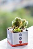 多汁植物和仙人掌 库存图片