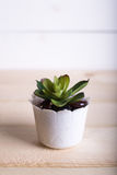 多汁植物在与拷贝空间的罐木桌背景中 极小值 库存图片