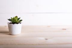 多汁植物在与拷贝空间的罐木桌背景中 极小值 免版税库存照片