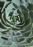 多汁植物在安大路西亚v 免版税图库摄影