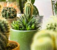 多汁植物宏观照片  沙漠植物在小植物中 Succul 图库摄影